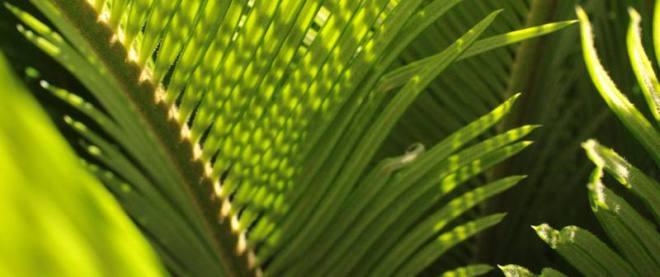 Nabożeństwa - Niedziela Palmowa