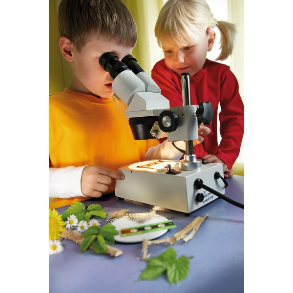 Mikroskop stereo