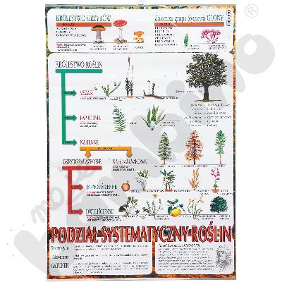 Plansza dydaktyczna - system roślin