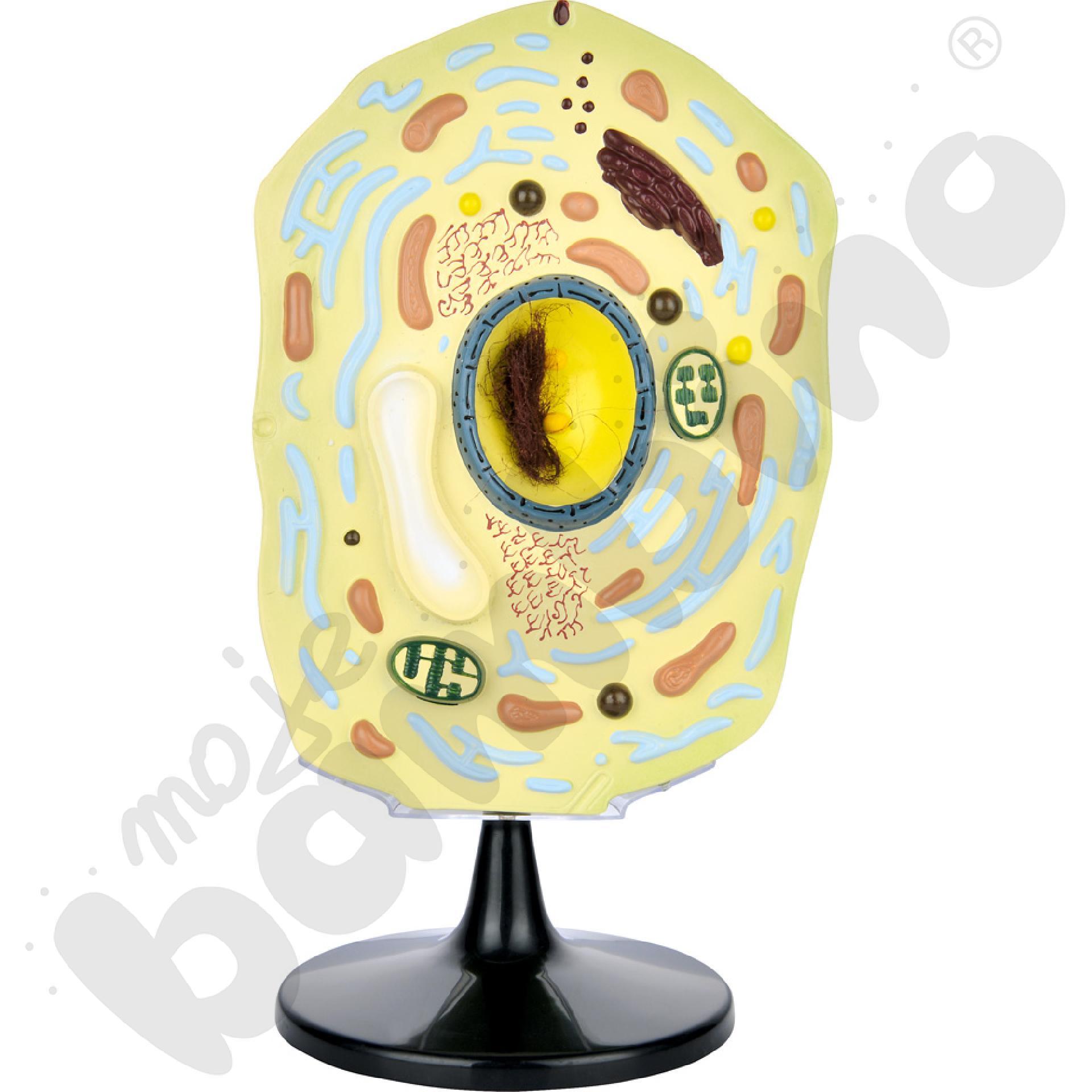 Komórka roślinna- model