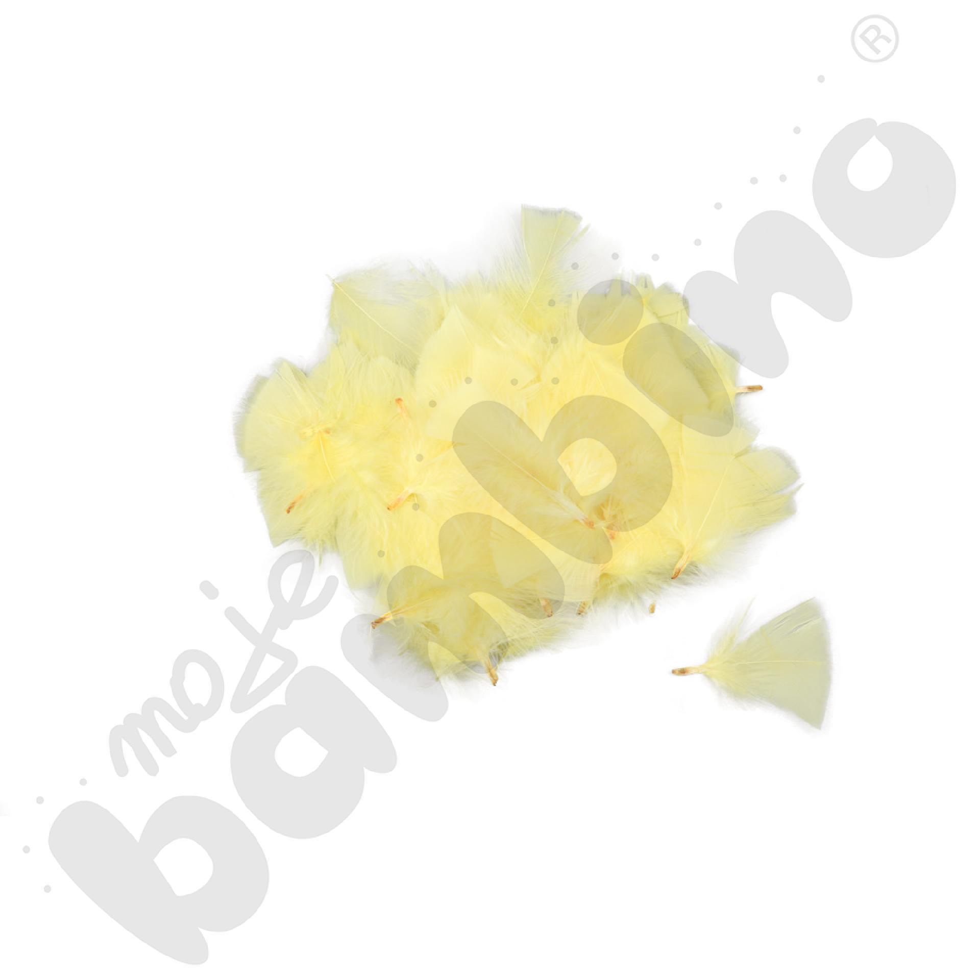 Żółte piórka