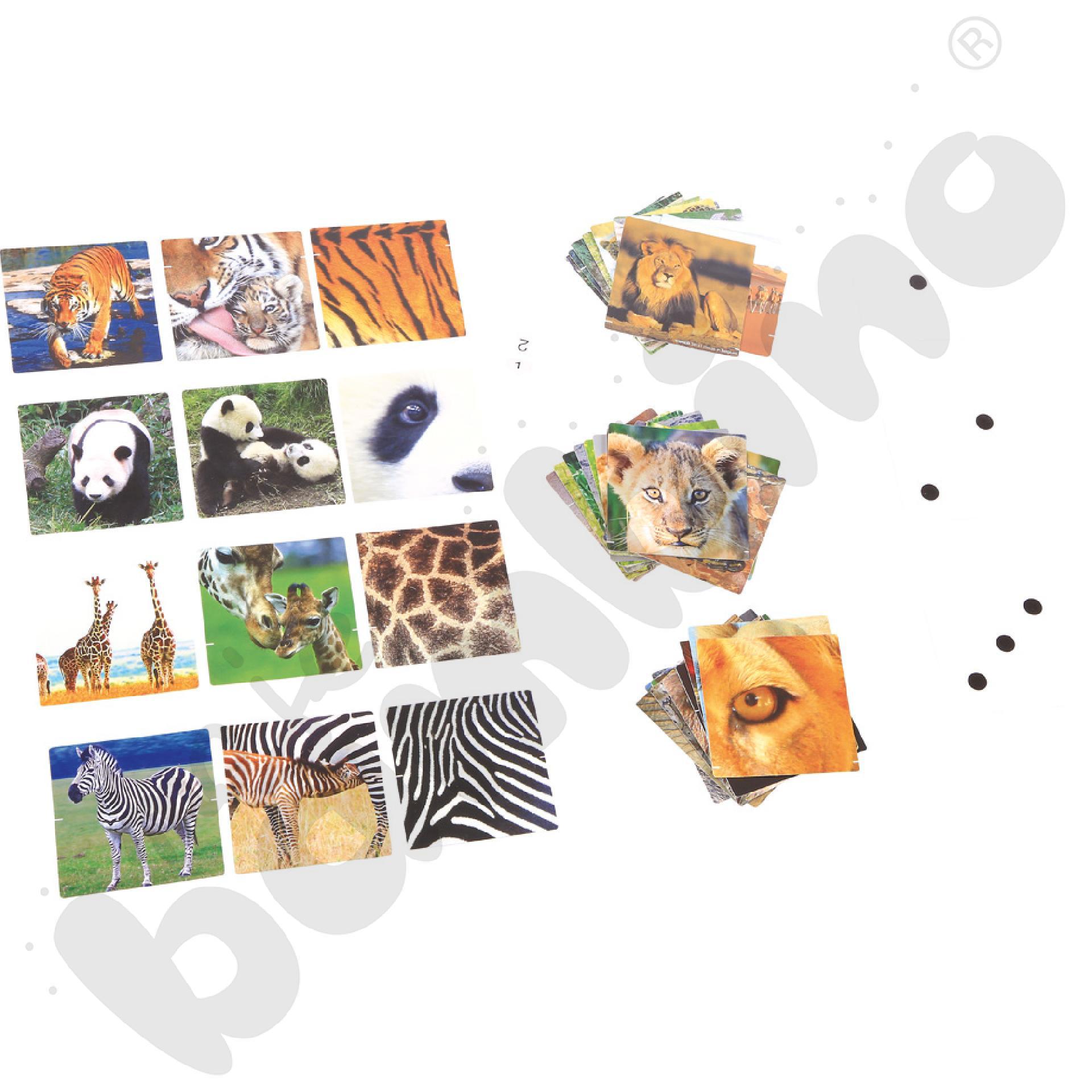 Zdjęcia zwierząt