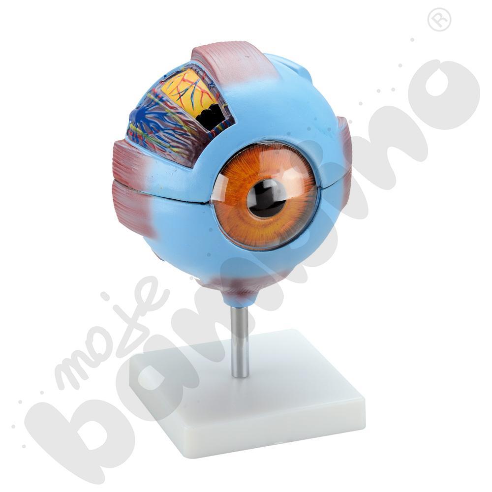 Oko człowieka