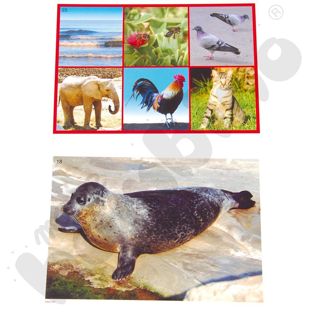 Zwierzęta i natura. Lotto dźwiękowe