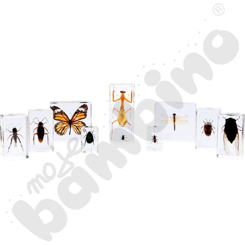 10 gatunków owadów w pleksi