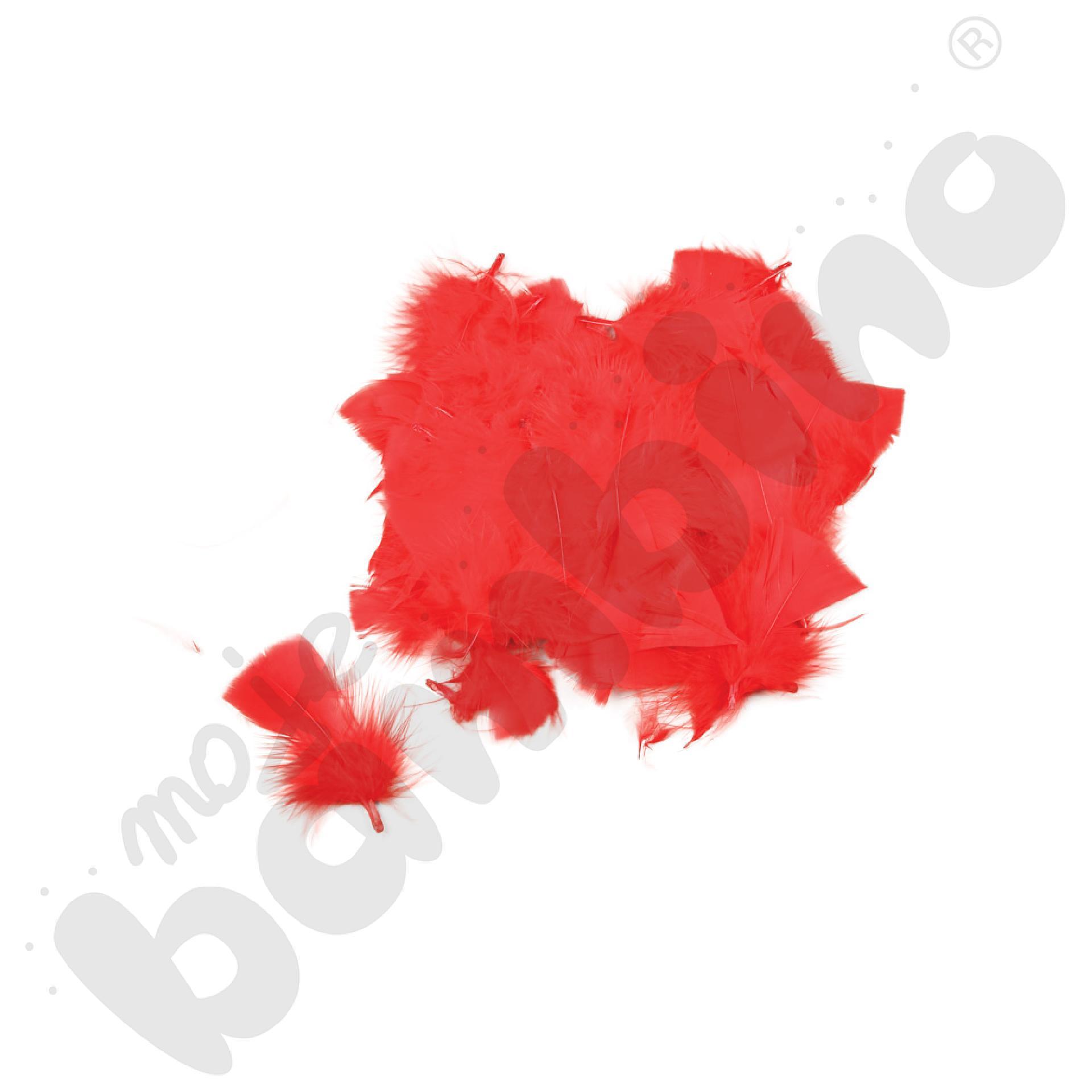 Czerwone piórka