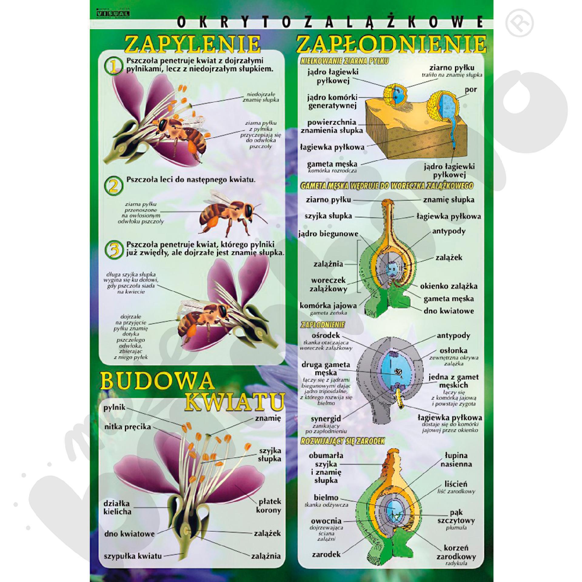 Plansza dydaktyczna - budowa kwiatu