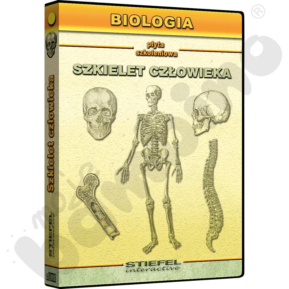 Szkielet człowieka -...