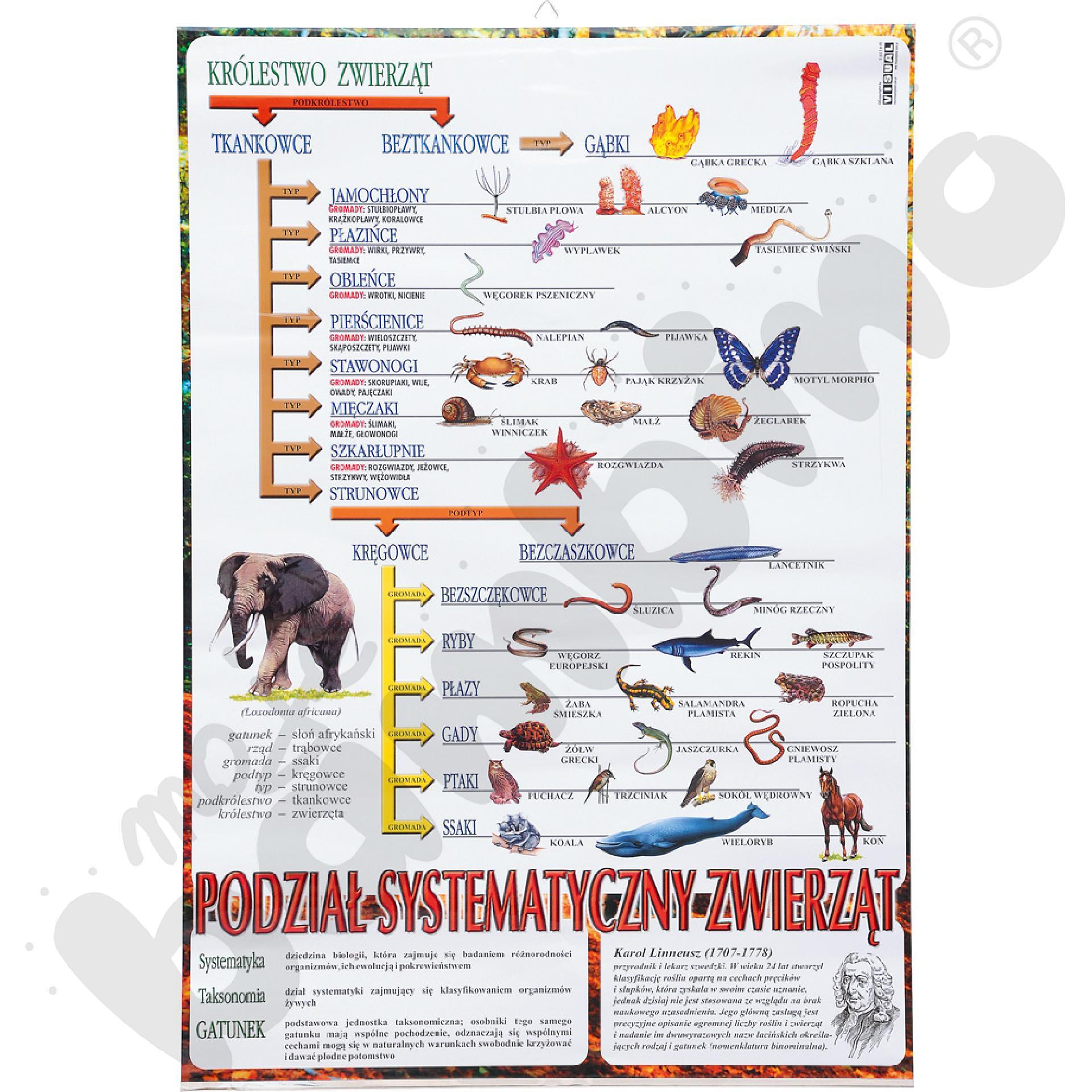 Plansza dydaktyczna - system zwierząt