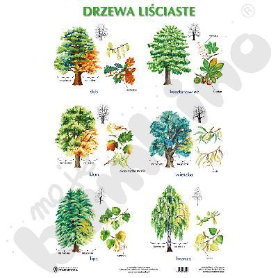 Drzewa liściaste i iglaste