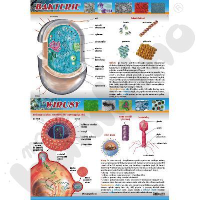 Plansza dydaktyczna - bakterie i wirusy