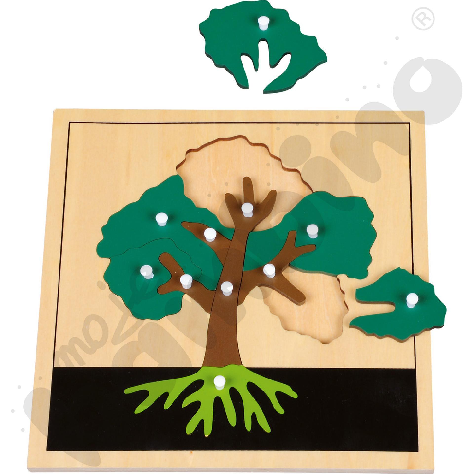 Puzzle botaniczne - budowa liścia, drzewa, kwiatu