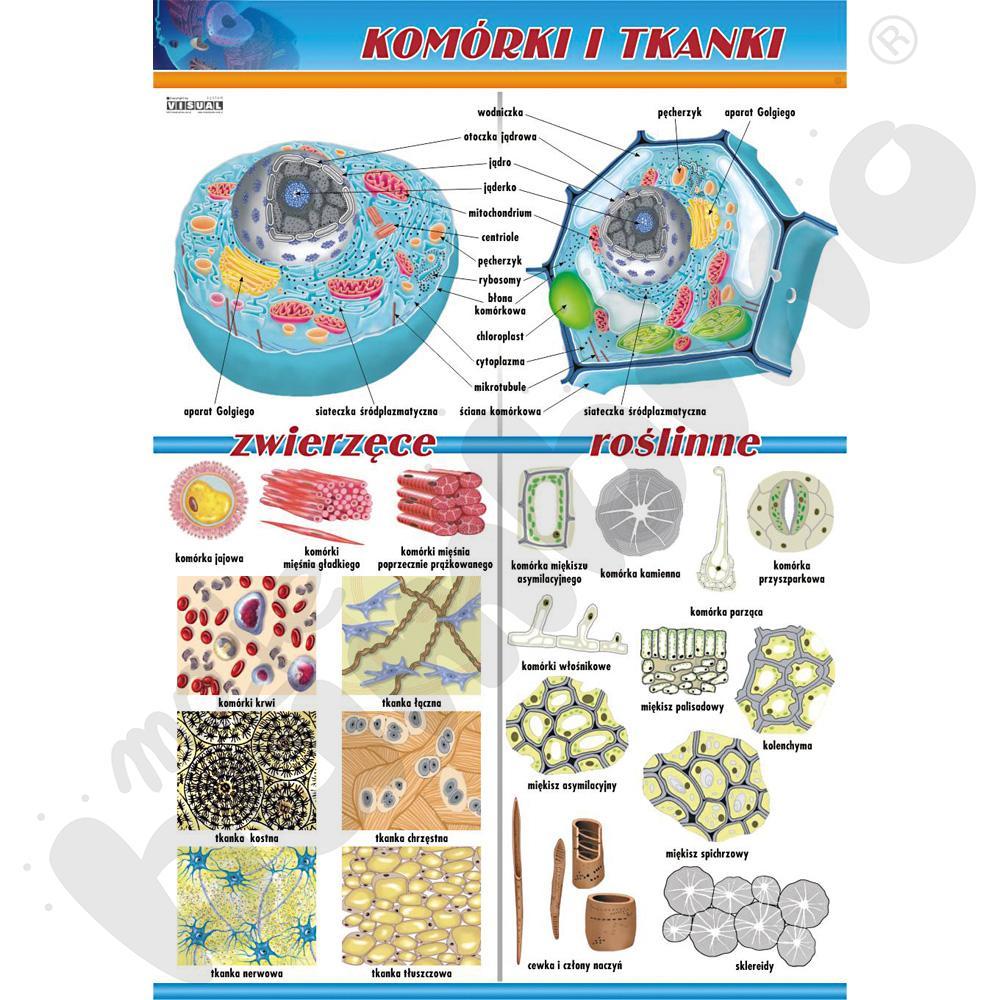 Plansza dydaktyczna - komórki i tkanki