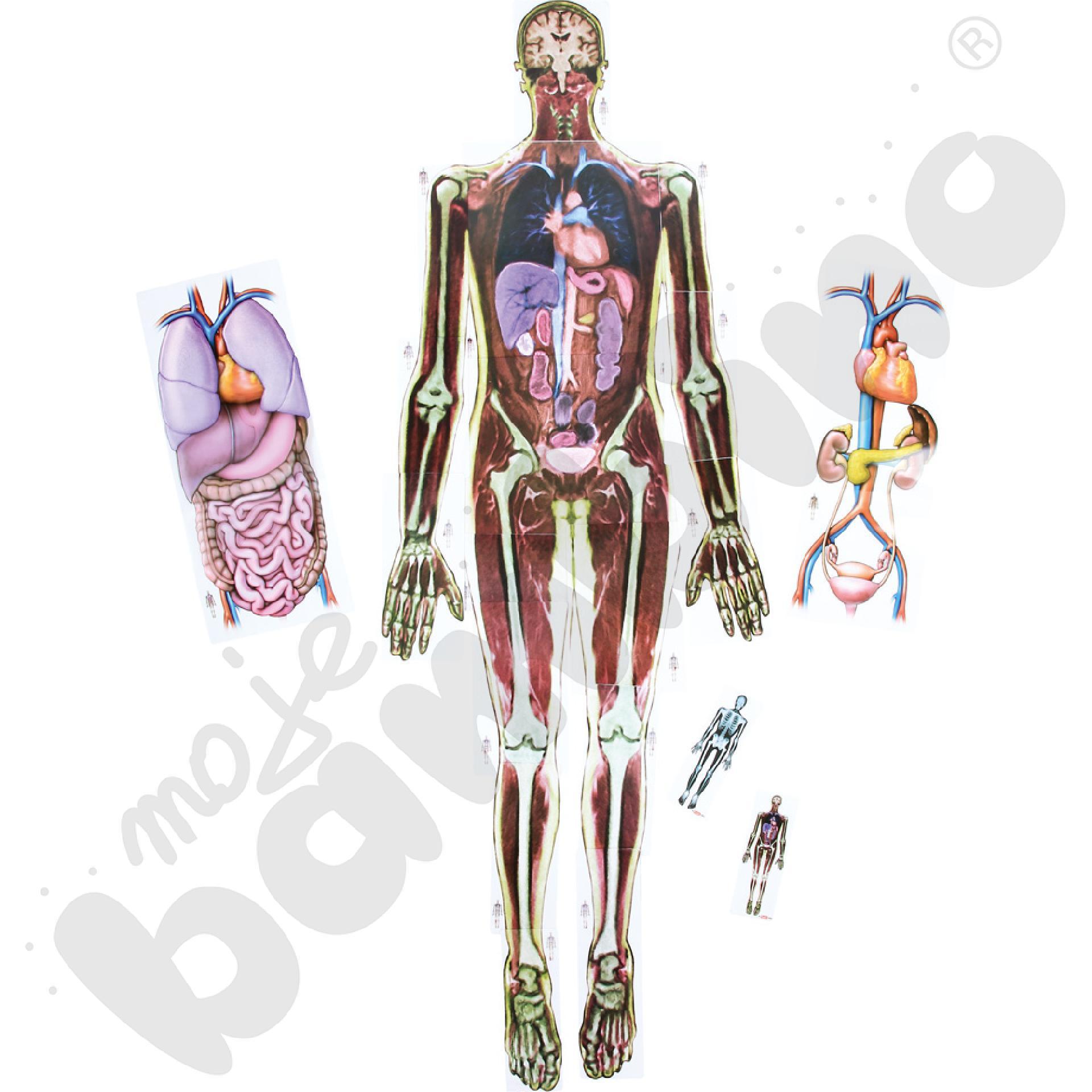 Zobacz co mamy w środku - rentgen człowieka