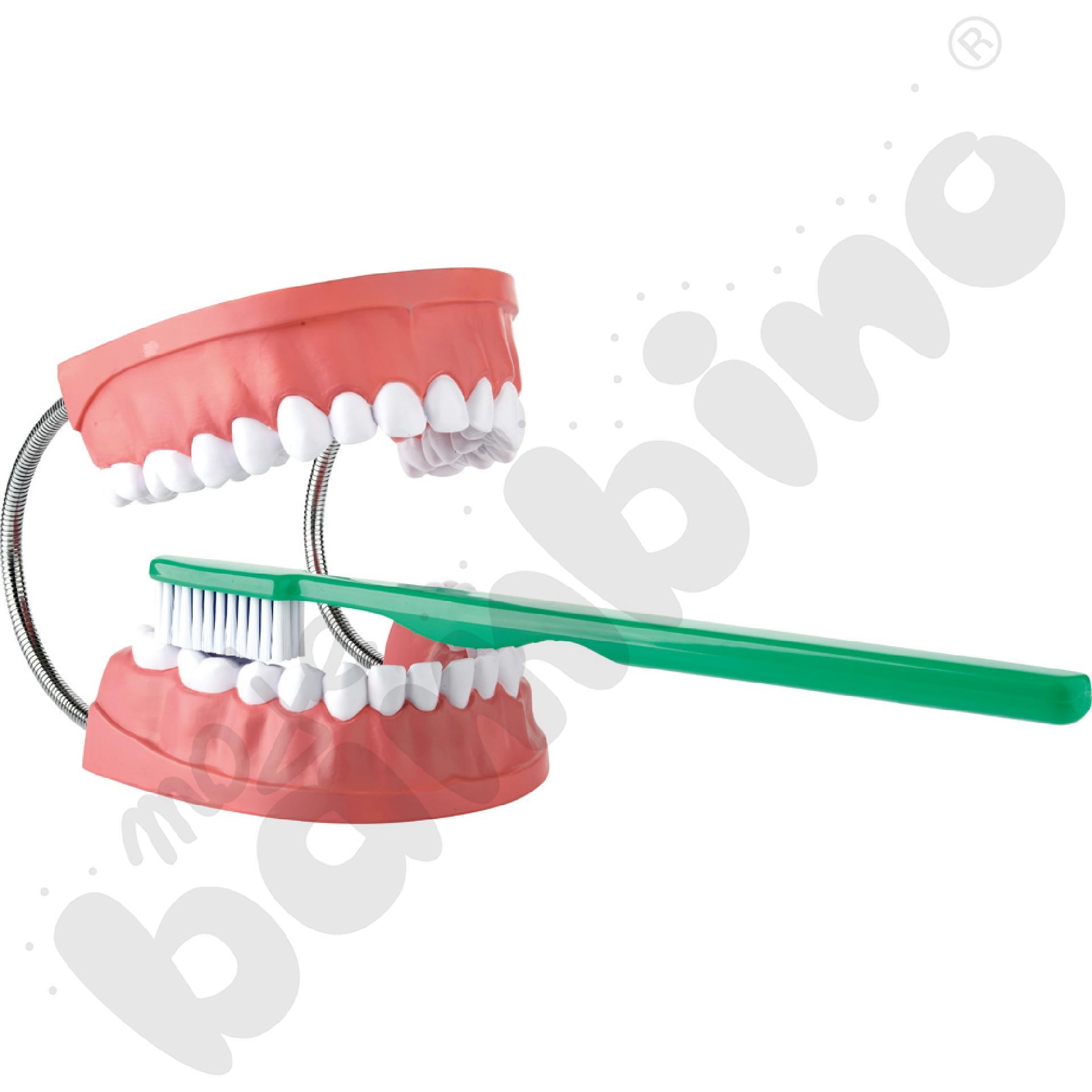 Zęby i szczoteczka
