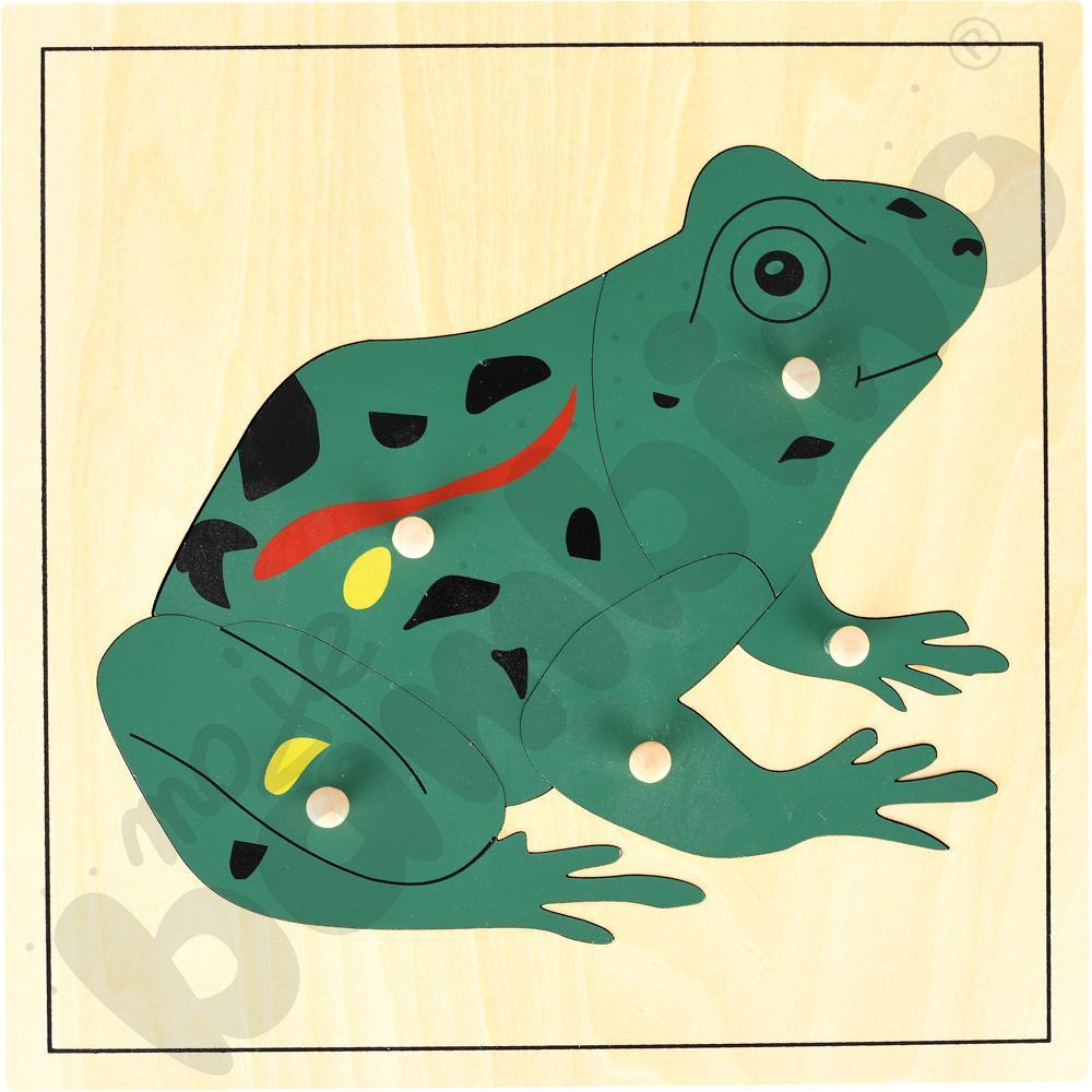 Żaba - puzzle