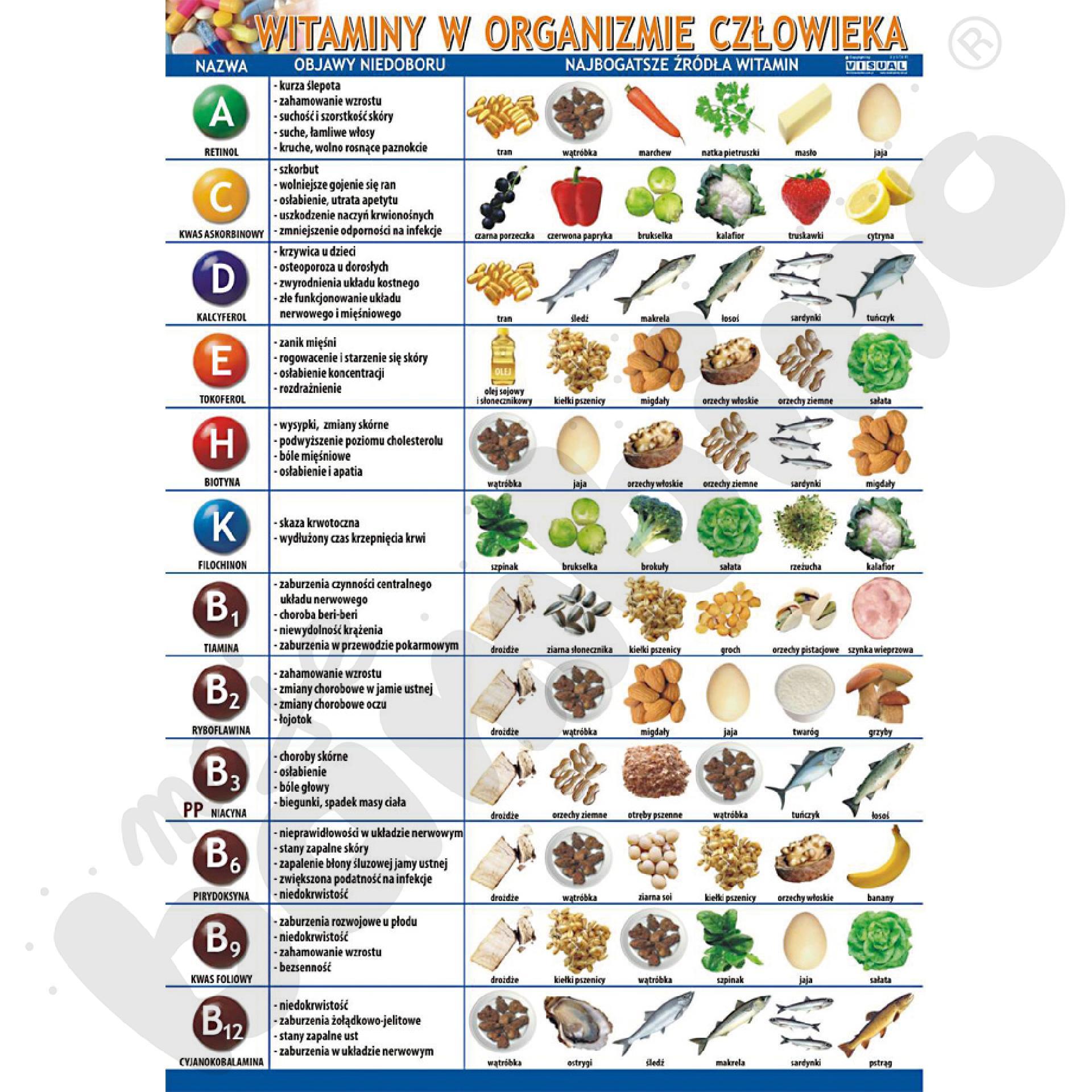 Plansza dydaktyczna - witaminy w organizmie człowieka