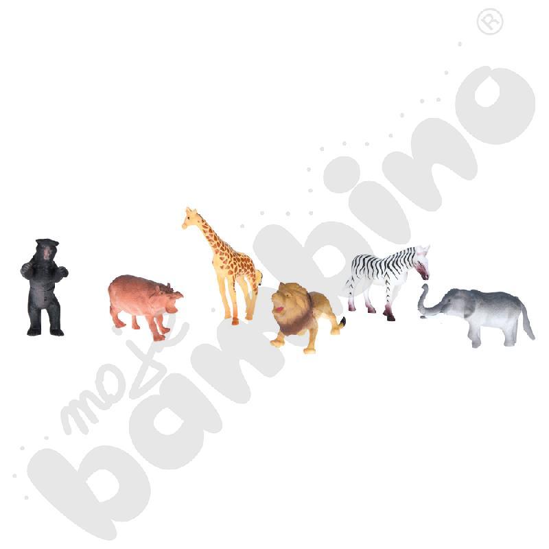 Zwierzęta tropikalne, 6...
