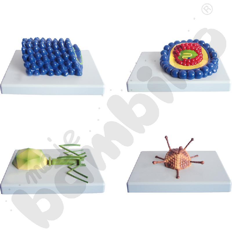 Wirusy - modele